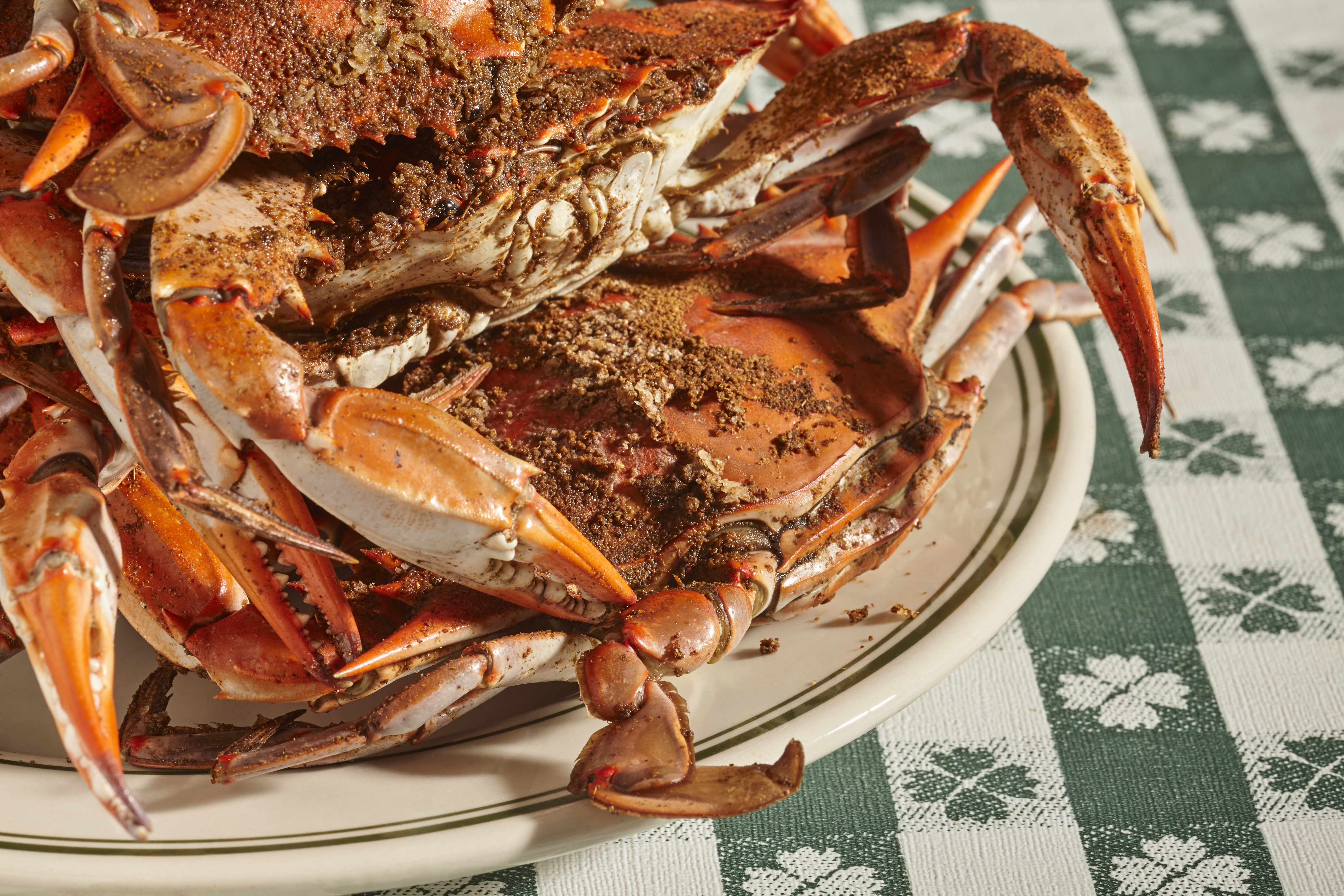 steamed female Maryland blue crabs